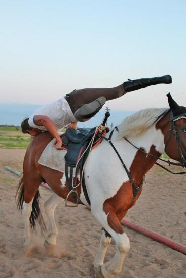 Žirgo ir žmogaus draugystė, jojimo pamokos, žirgų apjojimas ir dresūra - 13