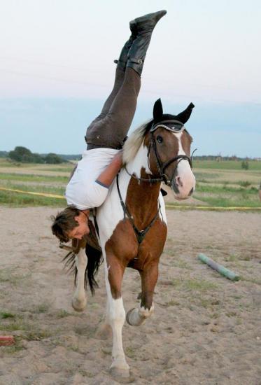 Žirgo ir žmogaus draugystė, jojimo pamokos, žirgų apjojimas ir dresūra - 14