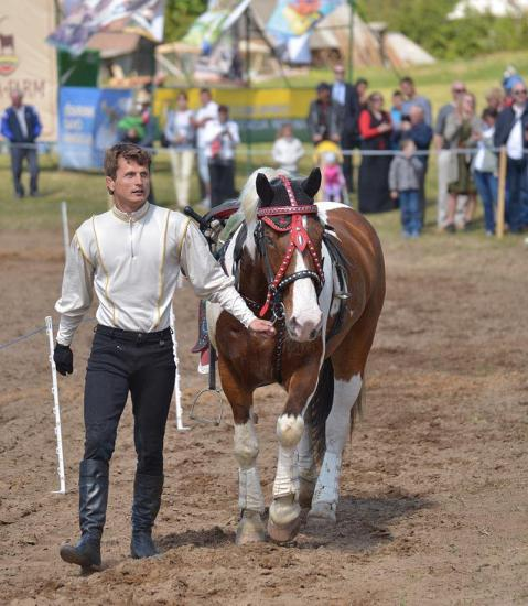 Žirgo ir žmogaus draugystė, jojimo pamokos, žirgų apjojimas ir dresūra - 17