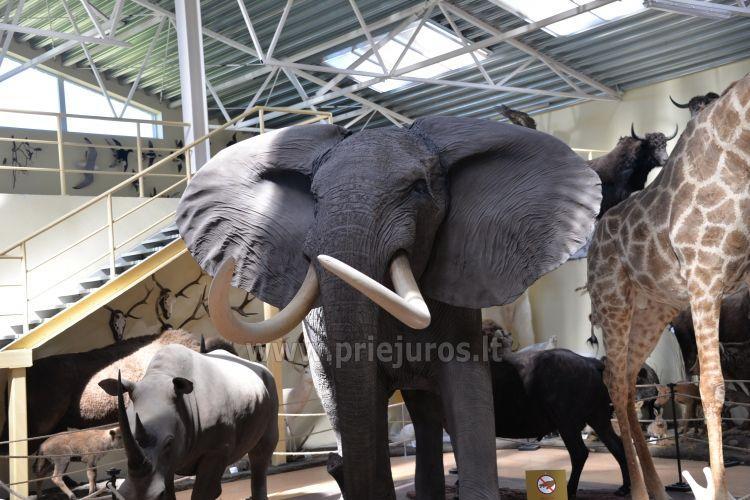 Mini zoosodas, safaris, elnynas, iškamšų muziejus Karklėje viešbutyje Gamtos perlas *** - 1