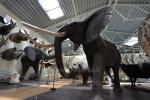 Mini zoosodas, safaris, elnynas, iškamšų muziejus Karklėje viešbutyje Gamtos perlas *** - 2