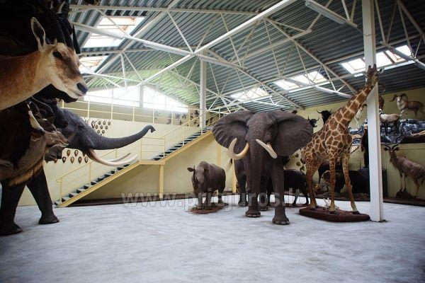 Mini zoosodas, safaris, elnynas, iškamšų muziejus Karklėje viešbutyje Gamtos perlas *** - 3