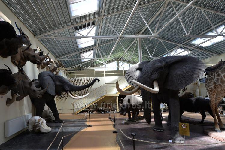 Mini zoosodas, safaris, elnynas, iškamšų muziejus Karklėje viešbutyje Gamtos perlas *** - 4