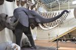 Mini zoosodas, safaris, elnynas, iškamšų muziejus Karklėje viešbutyje Gamtos perlas *** - 5
