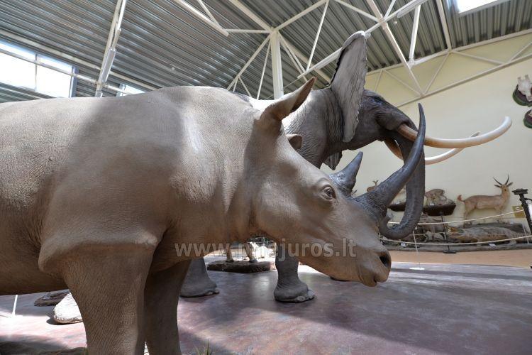 Mini zoosodas, safaris, elnynas, iškamšų muziejus Karklėje viešbutyje Gamtos perlas *** - 6
