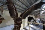 Mini zoosodas, safaris, elnynas, iškamšų muziejus Karklėje viešbutyje Gamtos perlas *** - 8