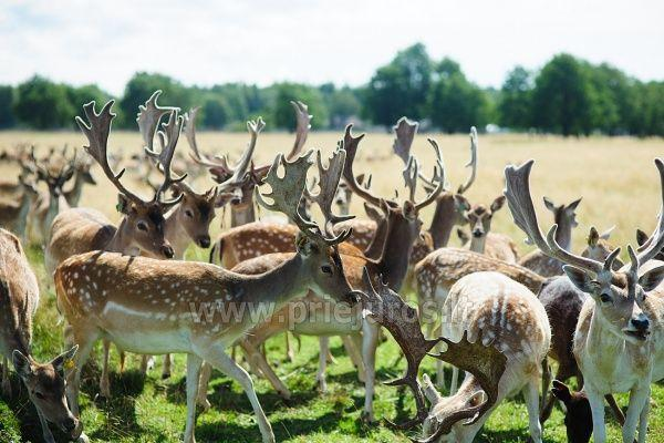Mini zoosodas, safaris, elnynas, iškamšų muziejus Karklėje viešbutyje Gamtos perlas *** - 14
