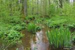 Žuvinto biosferos rezervatas - 3