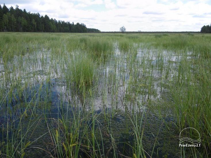 Čepkelių raistas – valstybinis gamtinis rezervatas - 2