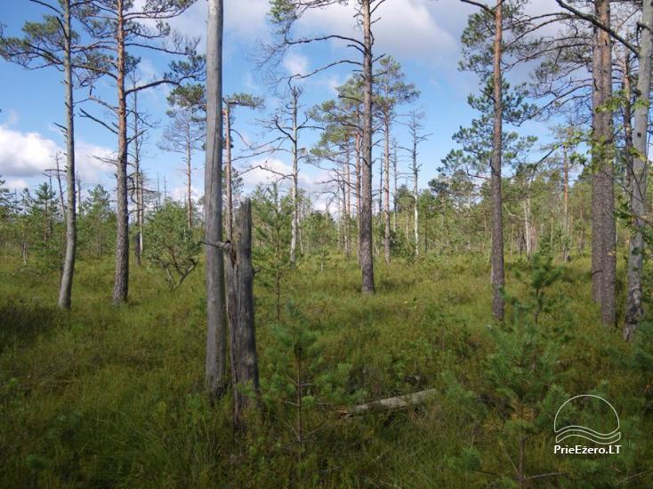 Čepkelių raistas – valstybinis gamtinis rezervatas - 1