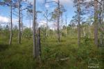 Čepkelių raistas – valstybinis gamtinis rezervatas