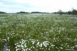 Čepkelių raistas – valstybinis gamtinis rezervatas - 5