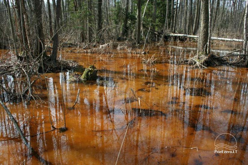 Čepkelių raistas – valstybinis gamtinis rezervatas - 8