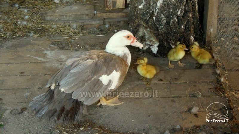 Baidarės, žvejyba - aktyvus poilsis sodyboje Stirnelės viensėdis - 14