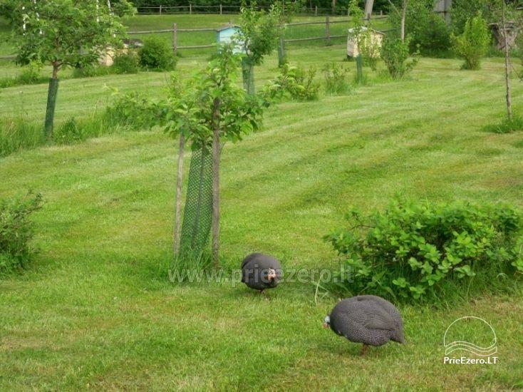 Baidarės, žvejyba - aktyvus poilsis sodyboje Stirnelės viensėdis - 29