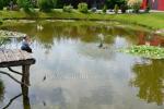Žvejų rojus sodyboje Skirvytėlė - 10