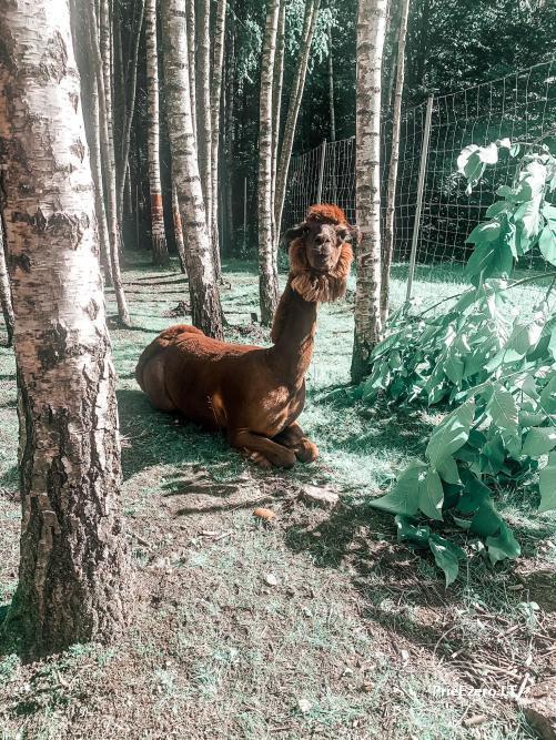 Dino parkas Radailių dvare 7 km nuo Klaipėdos - 1