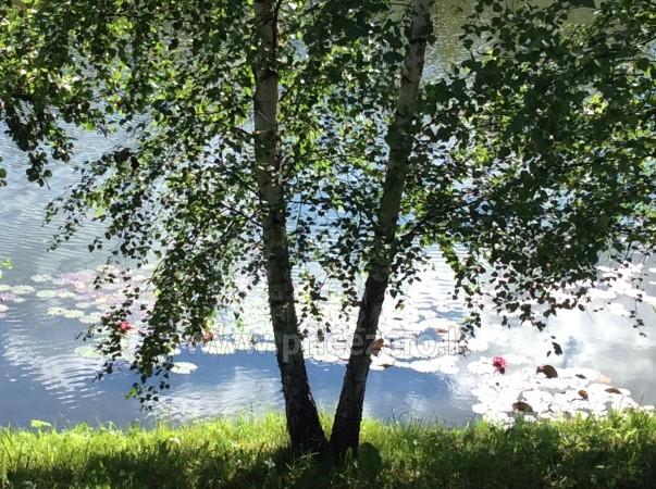 Panoraminė pirtelė ant ežero kranto. Su apgyvendinimu. - 24