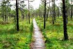 Praleisk romantišką savaitgalį sodyboje Dzūkijos miškuose. Sodyba Dzūkijos uoga - 5