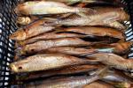 Žuvies rūkymas senovės rytų Aukštaitijos tradicijomis - 8
