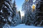 Daugiau sodybos teritorijos ir aplinkos nuotraukų - 24