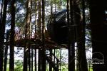 Palapinė medyje - 6